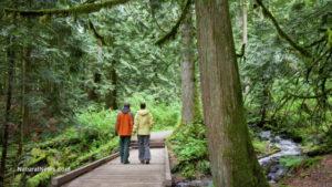 man-woman-walking-forest-trees-redwoods-bridge